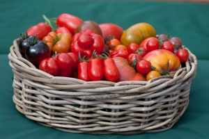 Basket of tomatoes, grown by Nicky Kyle © Jane Powers