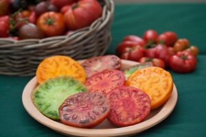Heirloom tomatoes, grown by Nicky Kyle © Jane Powers
