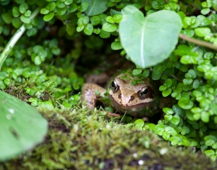 My friend, the frog © Jane Powers