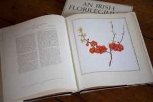 Chaenomeles x superba 'Rowallane' in the Irish Florilegium