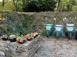 Well behaved wheelbarrows at Inish Beg © Jane Powers