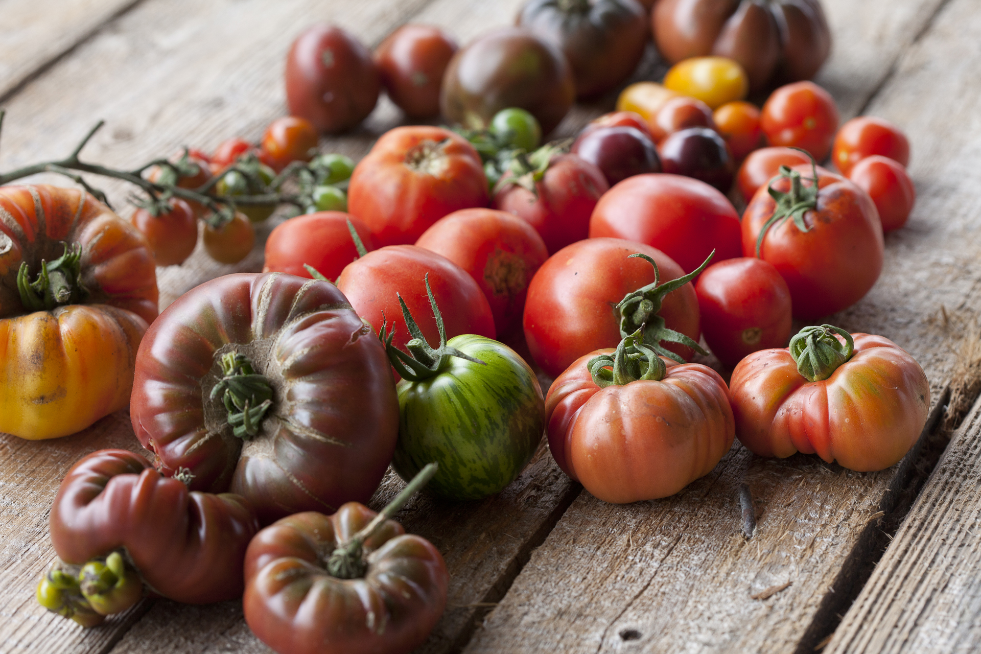 A selection of tomatoes grown at Brown Envelope seeds© Jane Powers
